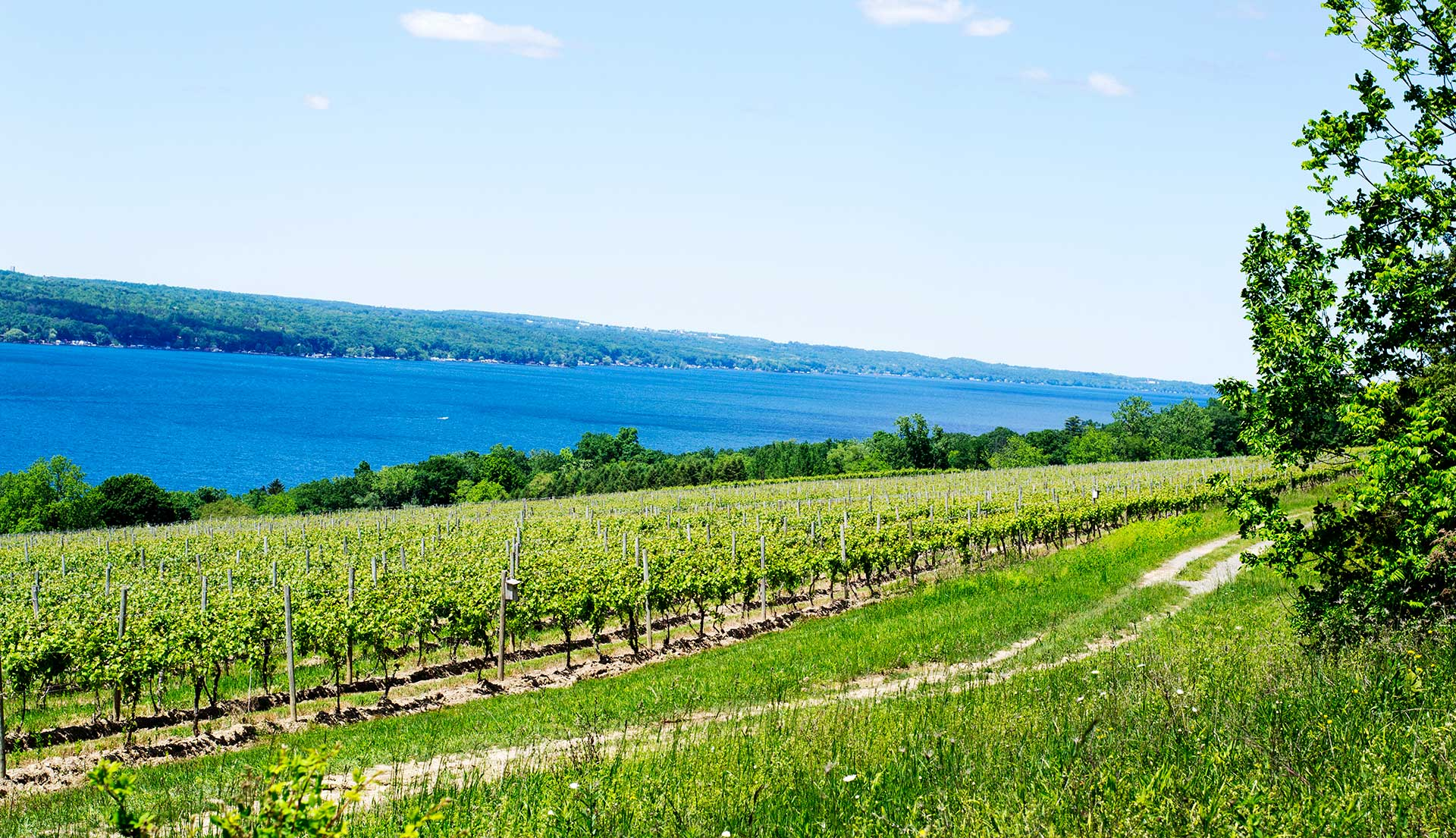 A sweeping view of the Hector Wine Company vineyards on a beautiful blue Seneca Lake